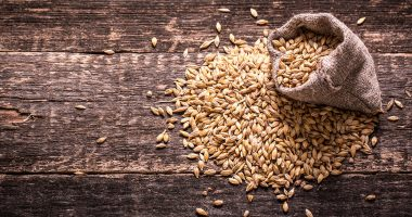 How to Choose Grains for Brewing?